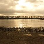 Baumreihe, die an die Sommerschlange vor der Strandperlentheke erinnert.