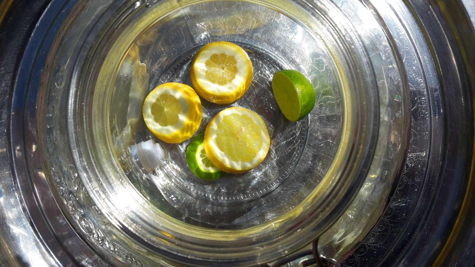 schön von der Sonne beschienene Zitronen und Limetten im Hinterhof der Superbude St. Pauli