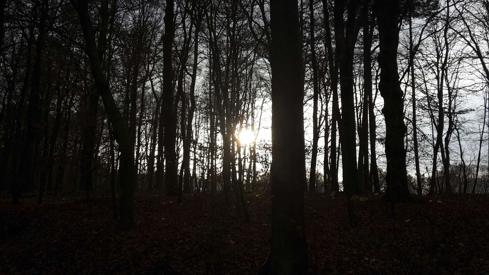 Bleiche Wintersonne hinter Baumsilhouetten
